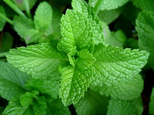 Insane Medicine - Mint has rosmarinic acid, and anti-inflammatory.