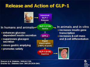 Action of GLP