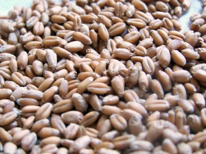 Wheat berries cook like brown rice and taste great when mixed with sunflower seeds!