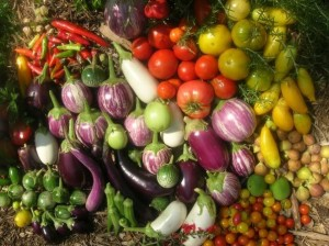 Peppers, Eggplant, tomatoes, potatoes have nicotine, which seems to decrease the risk of Parkinson's Disease.